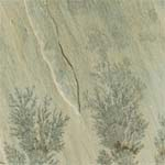 Sandstone Mint Fossils Indian Sandstone Supplier,Exporter,India