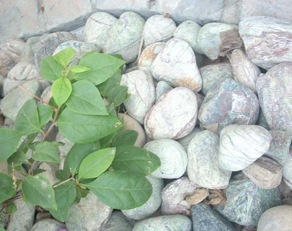 Green Forest Pebbles
